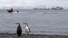 Българинът, който свири на пингвините