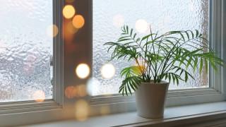 Как да се грижим за домашните растения през студените месеци