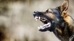 Прокуратурата разследва случай с нахапано от куче дете