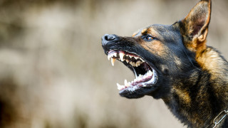 Домашно куче нападна жена в парк в София