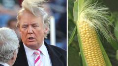 Каква е тайната на косата на Доналд Тръмп?