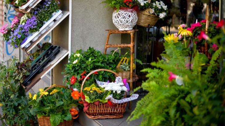 МОСВ съветва да не купуваме цветя и букети от търговци без разрешителни
