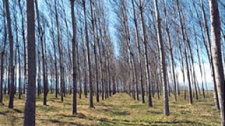 2300 безработни започват работа към  горския фонд