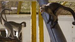 Зоопаркът във Варна придобива нов облик