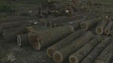 Циганин би лесничей със синджир, от махалата замерят с камъни