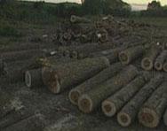 Спират строежа на ВЕЦ заради незаконна сеч