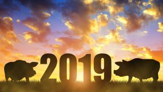 Какво трябва да знаем за годината на Земното прасе
