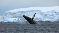 Китовете ще спасят света