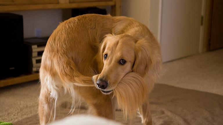 Всички сме виждали поне едно куче, което се върти в