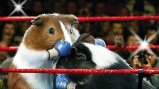 Олимпийски игри за гризачи