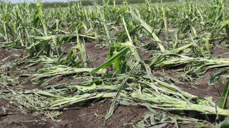 140 хил. дка насаждения са засегнати от градушки това лято