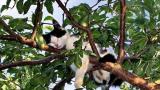 Най-малката котка в света е висока 10 сантиметра