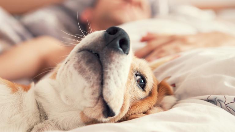 Съвети за здравословен сън
