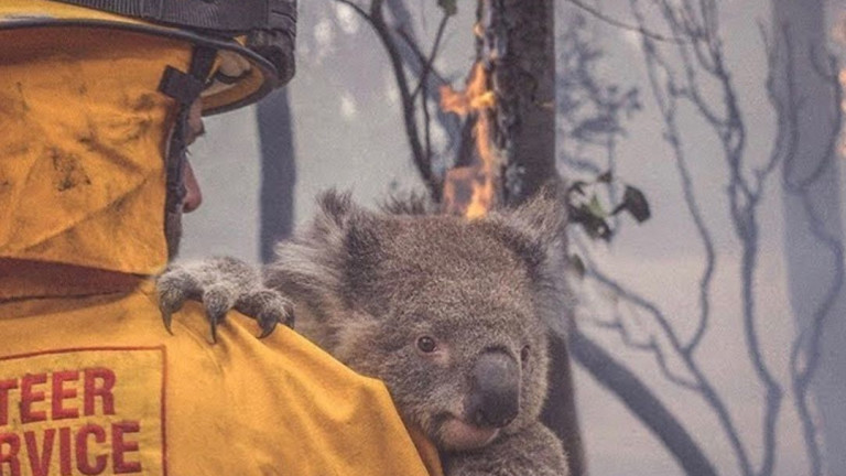 Как да помогнем на Австралия