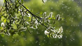 Кои са най-честите причинители на алергия