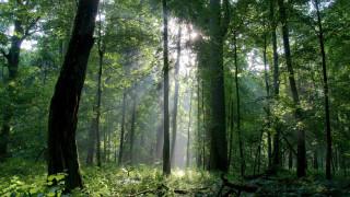 Природозащитници поискаха проверка на старите ни гори