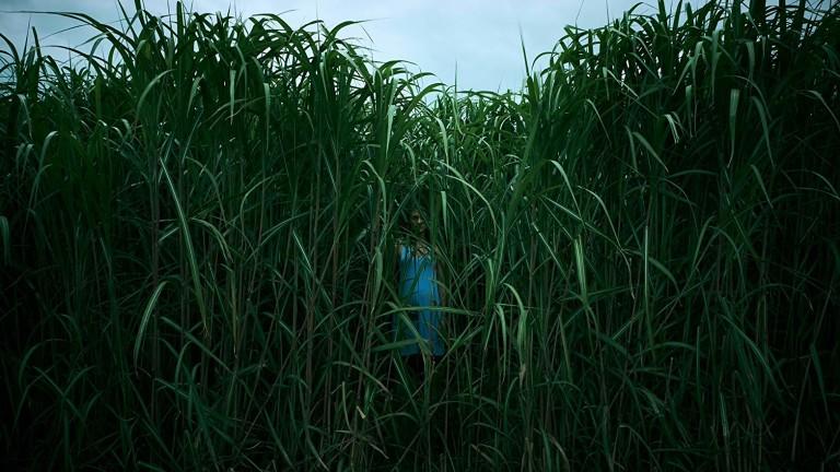 Първи трейлър на In The Tall Grass на Стивън Кинг