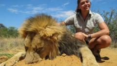 Половината лъвове в Африка изчезват до 20 години