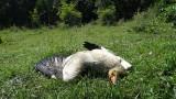 Откриха мъртво семейство египетски лешояди