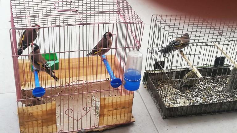 Пресякоха незаконна търговия със защитени птици в Пловдив