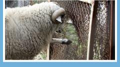 Все още в 16 зоопарка у нас няма добри условия