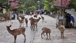 В Япония елени умират от поглъщането на пластмасови торби