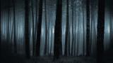 Ще секат дърветата, за да спасят горите от изсъхване
