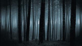 Спасиха трима, изгубили се в гората край Триград