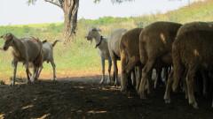 Стотици земеделци и животновъди плашат с безсрочна ефективна стачка