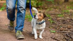 Русенци масово не регистрирали домашните си кучета