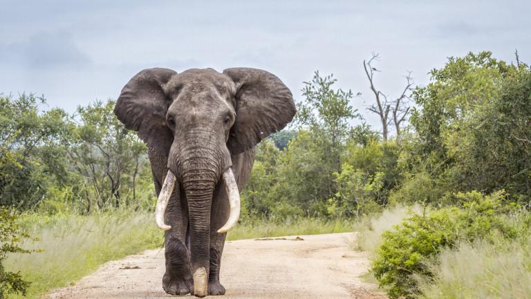 Снимка: В Ботсвана обмислят да правят храна за домашни животни от слонско месо