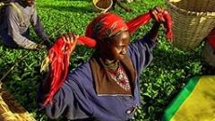 Най-големите производители на чай се обединяват в картел