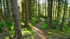 Варненци на протест заради изсичане на борова гора