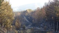Незаконна сеч на над 30 бука засякоха лесничеите
