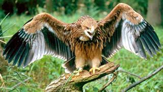 3 млн. лв. от еврофондовете за птиците у нас