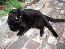 Издигнаха паметник на габровската котка