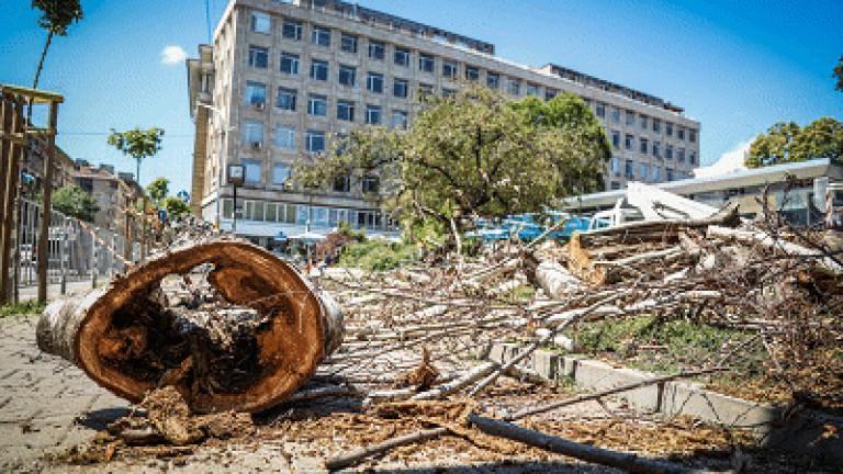 Започна подмяната на стари и изсъхнали дървета в две от