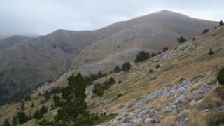 """Нямало дублиране на територии сред върнатите """"царски"""" гори"""