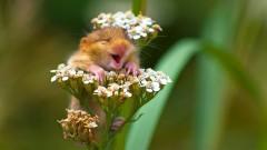 Животни, които ще ви накарат да се усмихнете (СНИМКИ)