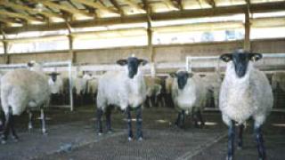 Няма болни животни у нас от новия грип