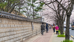 Затварят най-големия пазар за кучешко месо в Южна Корея