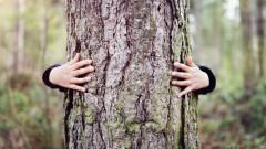 Притеснителните промени, които се случват в горите