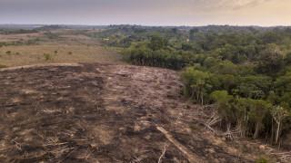 Две трети от тропическите гори по света са унищожени или деградирали
