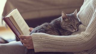 Защо котките толкова много обичат топлината
