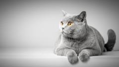 Международна изложба на котки в София