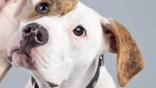 Кампания помага на малтретирани и изоставени животни