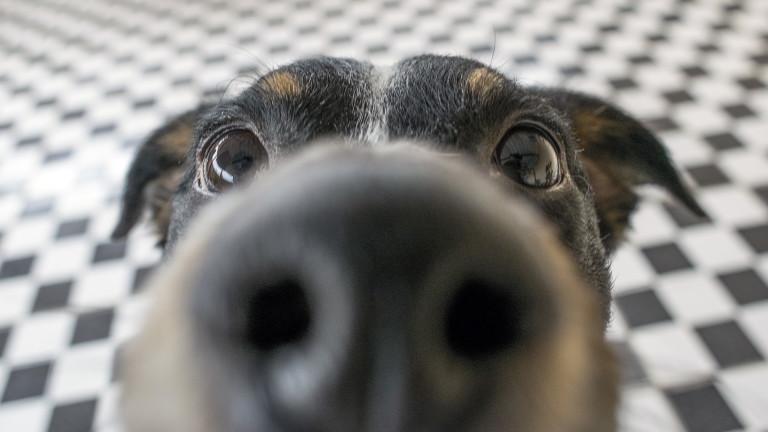 Защо носовете на кучетата са мокри