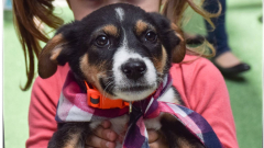 """70 кучета осиновени от приютите на """"Екоравновесие"""" през май"""