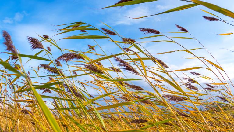 Жълт код за силен вятър е обявен в неделя, съобщиха