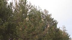 С нова наредба започват сеч на засегната от корояди дървесина